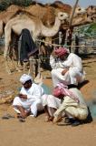 Al Ain Camel Market