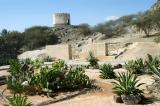 Cactus Garden around Al Bidyah Mosque with a watchtower on the hill