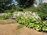 Azalea Garden Area