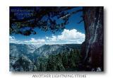 TreeLightning2.jpg