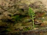 Micro landscape
