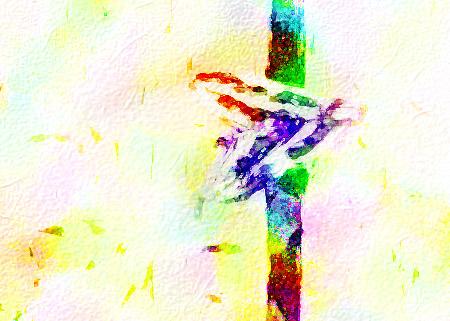 SA moth copy 2.jpg