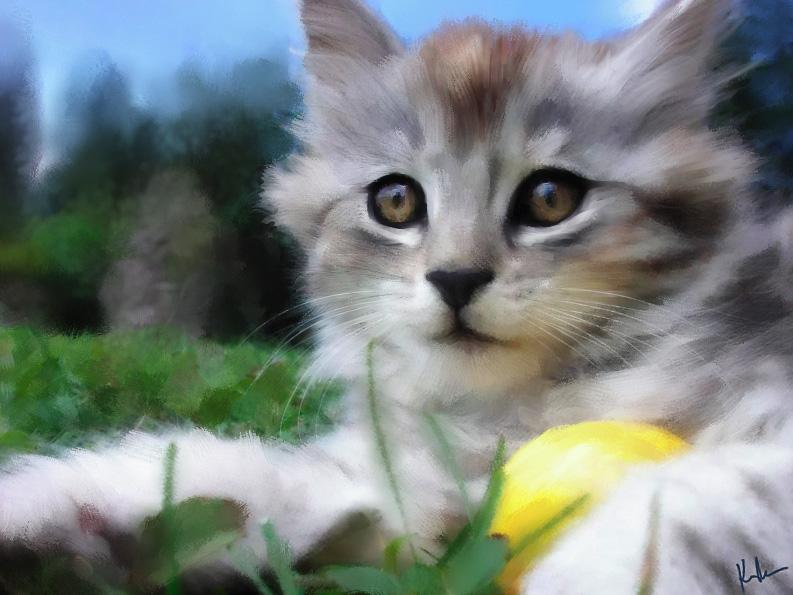whiskers1.jpg
