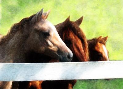 3 horses.jpg