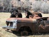Mustangs-and-Junk.jpg