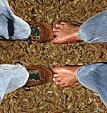 feet copy.jpg