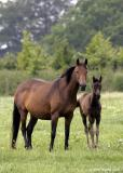 20050628 Thoroughbred Mare & Foal