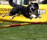 20050709 Agility Dog