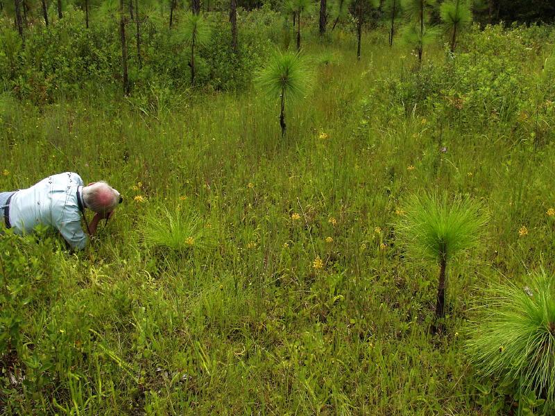 Bob Ferry shooting Platanthera ciliaris group