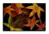 Leaf Man SP  October 28