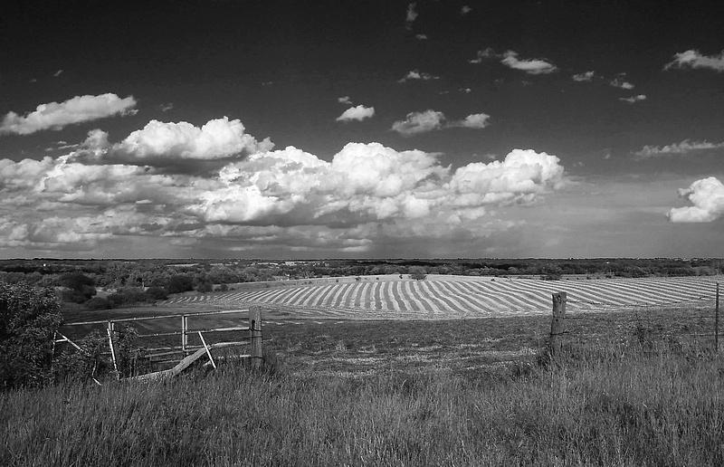 Hay Field in B/W