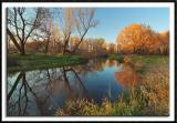 Placid Rice Creek