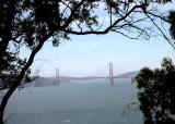 View of Golden Gate from the Presidio