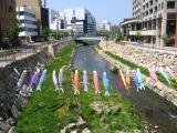 Koi-no-bori over the Metoba-gawa