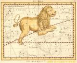 plate 17 - Lion