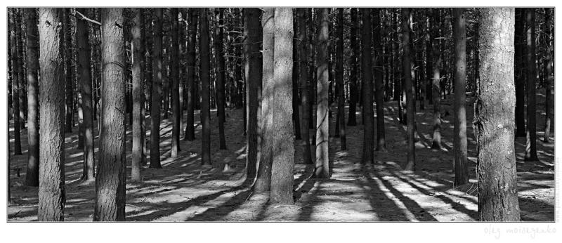 Barcode of Pine Forest (240Kb)