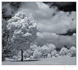 The infrared summer or... nuclear winter?