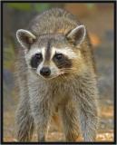 Wichita Mountains Wildlife Refuge & Native American Pow Wow