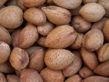Amêndoas /|| Almonds (Prunus dulcis)