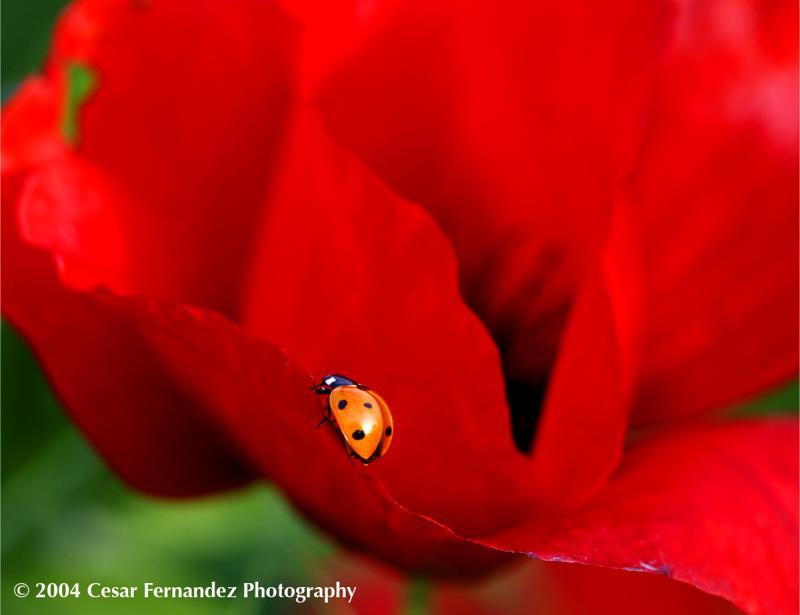 Ladybug copy.jpg