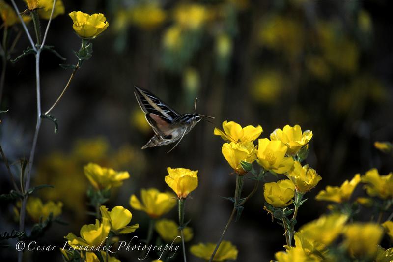 MothYellow Flower copy.jpg