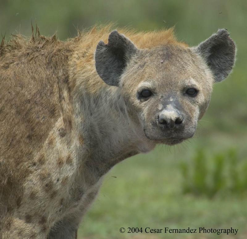 Winner-of-Miss-Serengeti-Contest