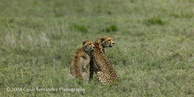 Cheeta Mother and Cub