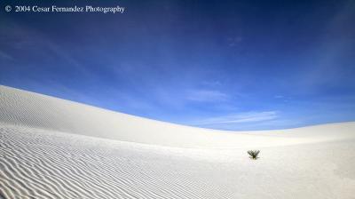 White Sands-40.jpg