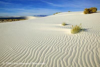 Whitesandsfootprints.jpg