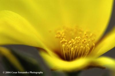 flor amarilla 1 copy.jpg