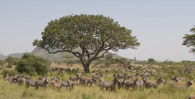 Seronera region, Serengeti.