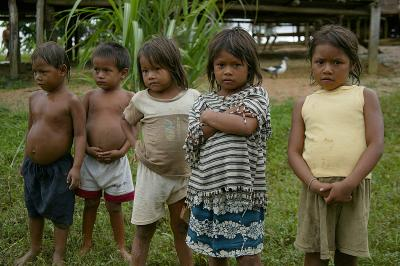 Amazonas244_RJ.jpg